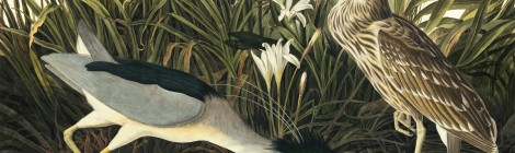 Audubon and the Avian Experience