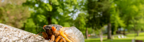 Bring on the Noise: An Ode to Cicadas