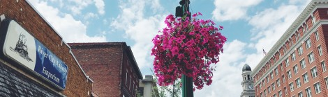 Saving Downtown's Flowers