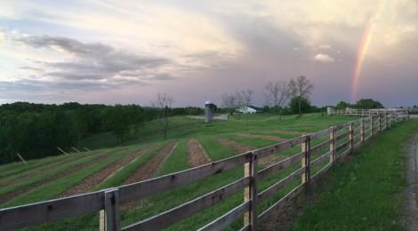 Herot Hall Farm